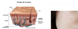 Estructura de la piel