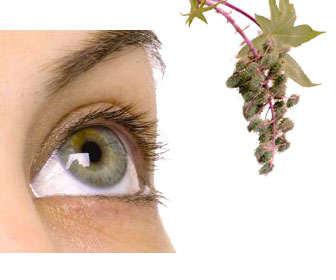 aceite ricino para las pestañas y cejas