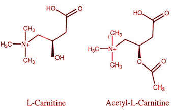 acetil y l carnitina diferencias