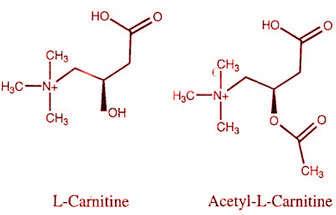 acetil y l carnitina diferencias