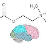 acetilcolina funcion