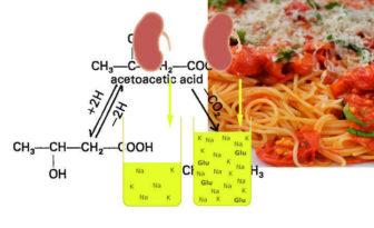 acido acetoacetico que es