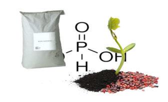 ácido fosforoso usos