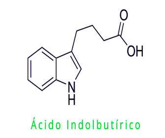 acido indolbutirico aib fórmula y estructura química