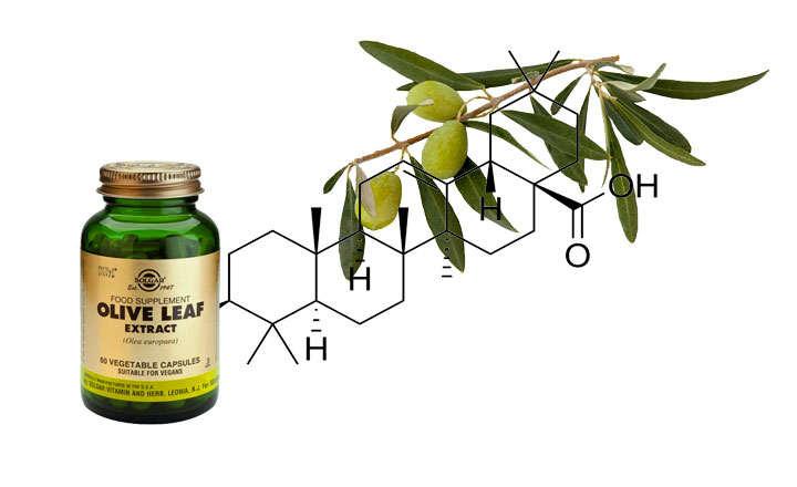 Propiedades y beneficios del acido oleanolico