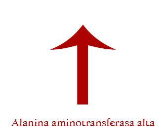 Alanina aminotransferasa alta