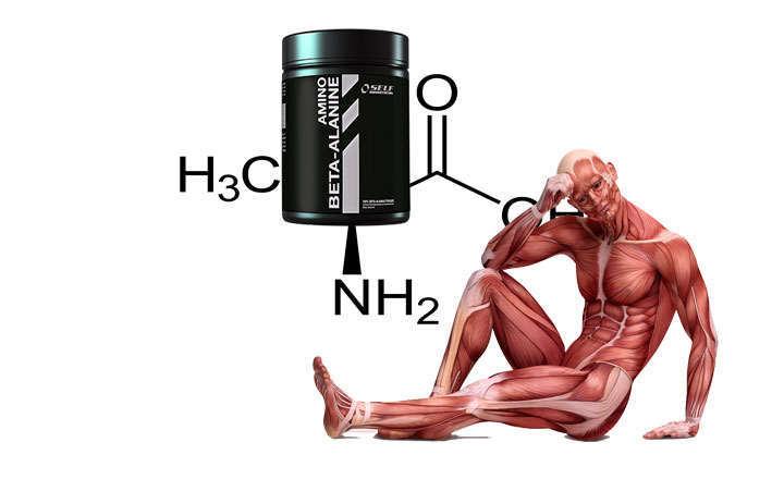 Que es alanina y cuál es su función en el cuerpo
