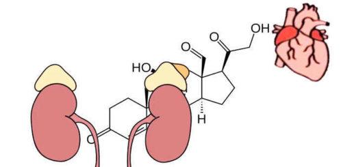 Qué es aldosterona y cuál es su función