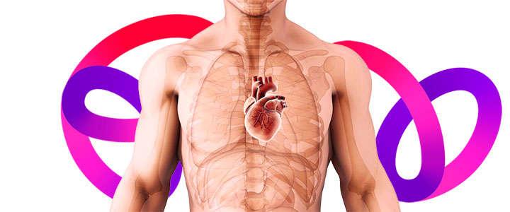 La clorofila es una alimento que cuida la salud cardiovascular