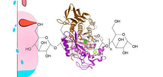 amilasa salival y alfa amilasa