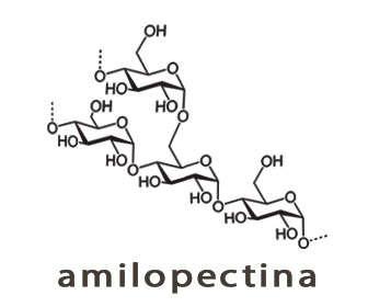 amilopectina estructura