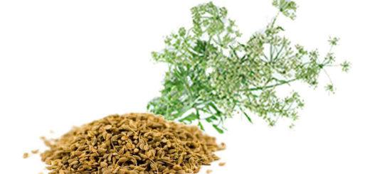 anis verde semillas rama