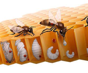 Eliminar varroa en apicultura con ácido metanoico o fórmico