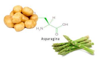 asparagina aminoácido