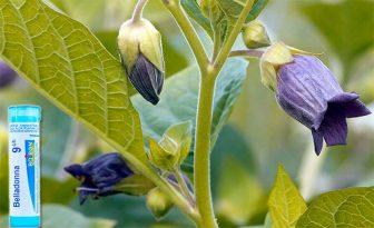 belladona homeopatia para que sirve