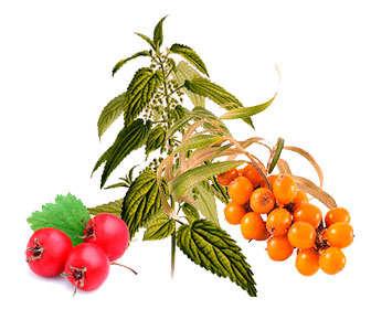 Alimentos ricos en beta sistosterol o b-sistosterol
