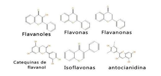 tipos de bioflavonoides y estructura química