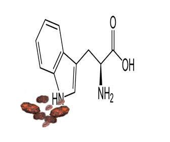 Contenido de triptofano del cacao