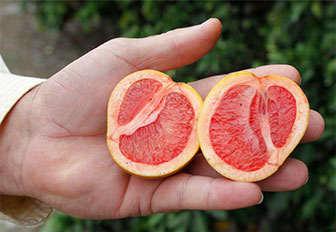 contenido de camu camu y vitamina c