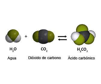 acido carbonico en el cuerpo humano