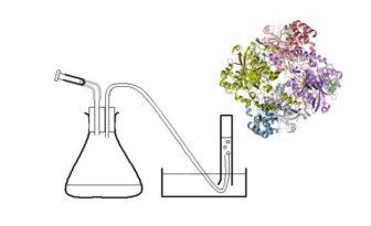 catalasa enzima