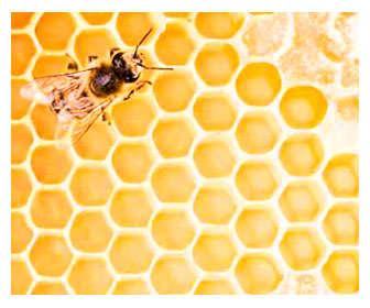 que es cera de abejas