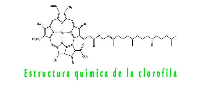 Estructura química de la Clorofila A y B