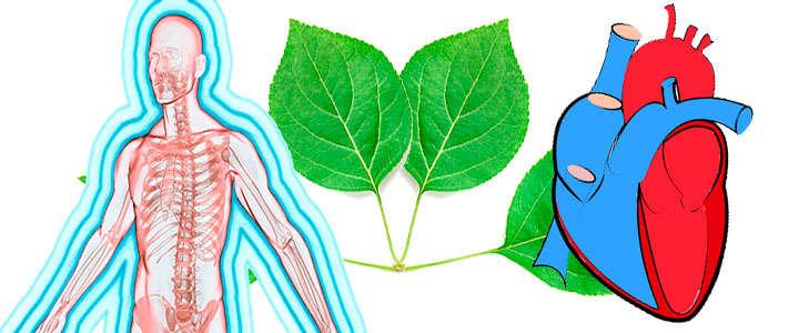 Propiedades y beneficios de la clorofila para la salud humana