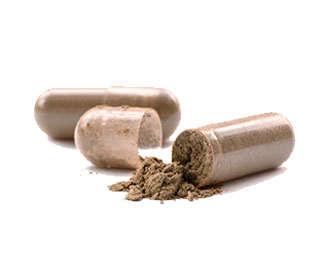 composicion capsulas ganoderma