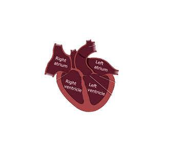 Evitar contraindicaciones para el corazón al tomar suplementos con taurina