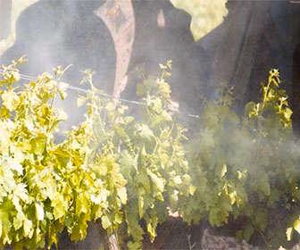 Dosis de oxiclouro de cobre en cultivo ecologico