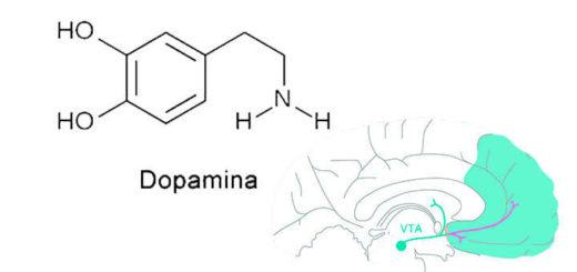 Qué es dopamina