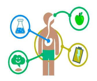 Efectos de los minerales sobre el metabolismo y la salud de las personas