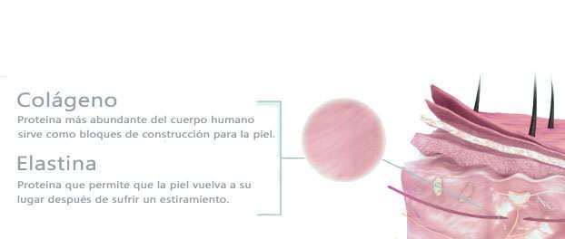 Beneficios y propiedades de la elastina para la piel