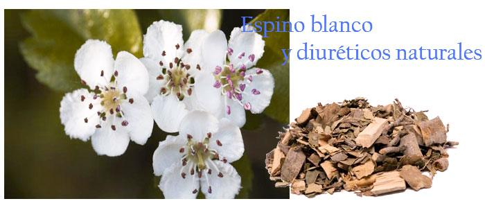 Espino blanco y diuréticos naturales para la hipertensión