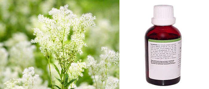 Propiedades de la planta Filipendula ulmaria o Reina de los prados