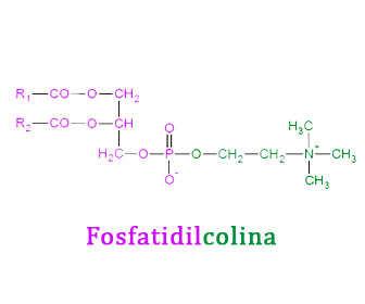 fosfatidilcolina estructura