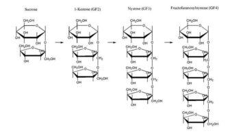 fructooligosacaridos estructura