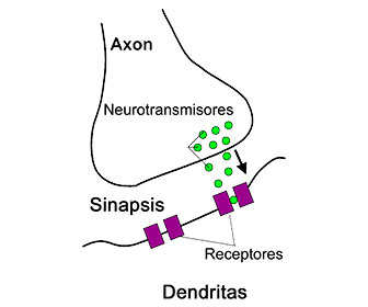 biosintesis de glicina neurotransmisor