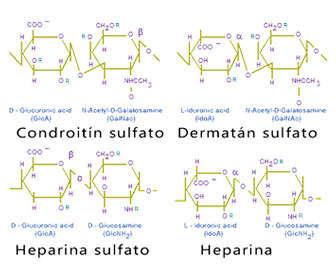 glicosaminoglicanos estructura