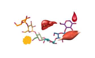 glucogeno que es
