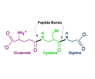 Estructura química de glutatión y relación con cisteína y glicina