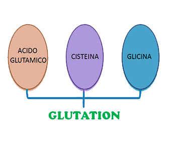glutation estructura