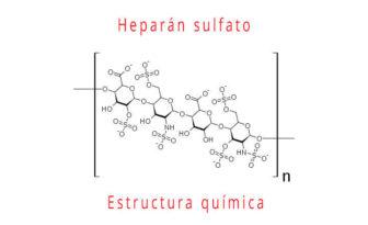 heparan sulfato estructura química