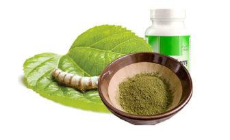 hojas de morera, propiedades y beneficios para la salud