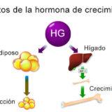 Efectos de la hormona de crecimiento