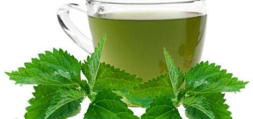 infusion de ortiga verde y seca