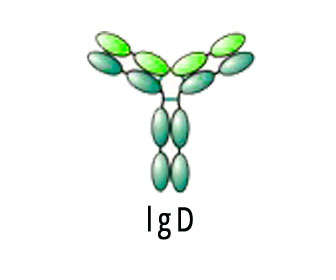 inmunoglobulina d
