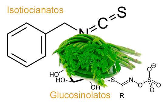 isotiocianatos y glucosinolatos que posee moringa