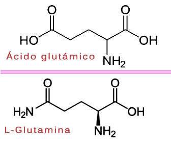 Estructura quimica de l-glutamina acido glutamico